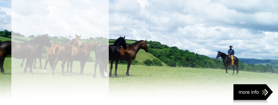 horse training moretonhampstead